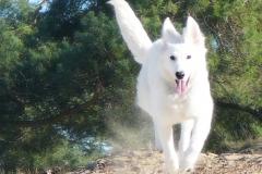 white_dog